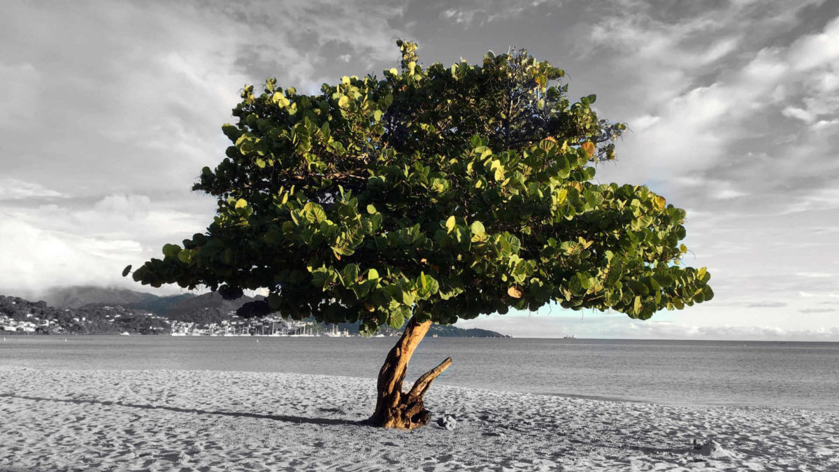Planting seeds and letting time nourish their growth is how to become a millionaire in 10 years (or less!). This tree was shot on a beach of Grenada, fighting for its life alone, but thriving.