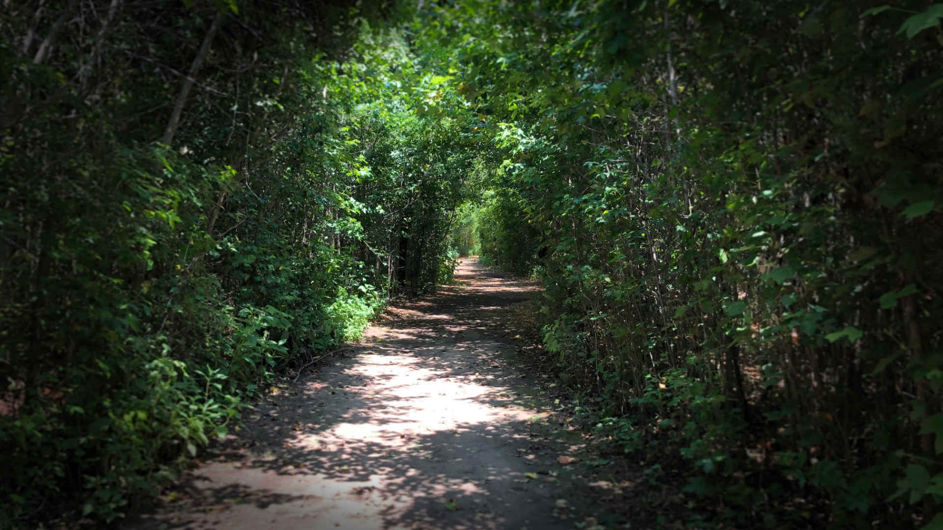 Hiking a nearby state park trail, an excellent staycation idea to get you out into nature.
