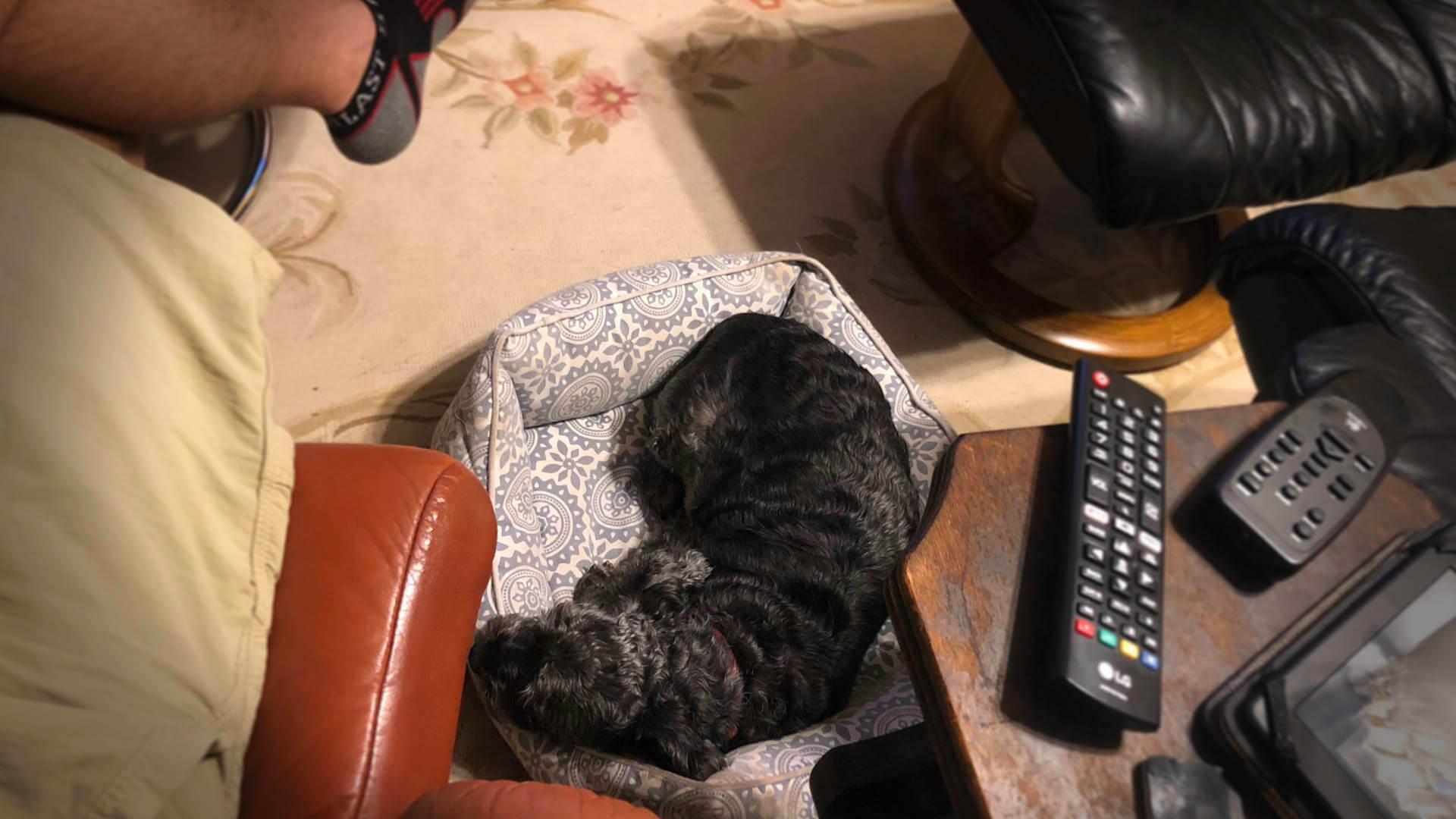 ttl-animal-welfare-max-bed
