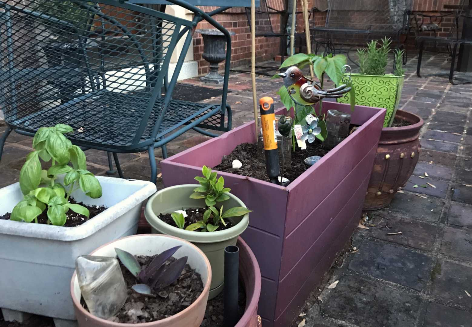 A bit of Jenni's gardening handy work—herbs and plants in pots!