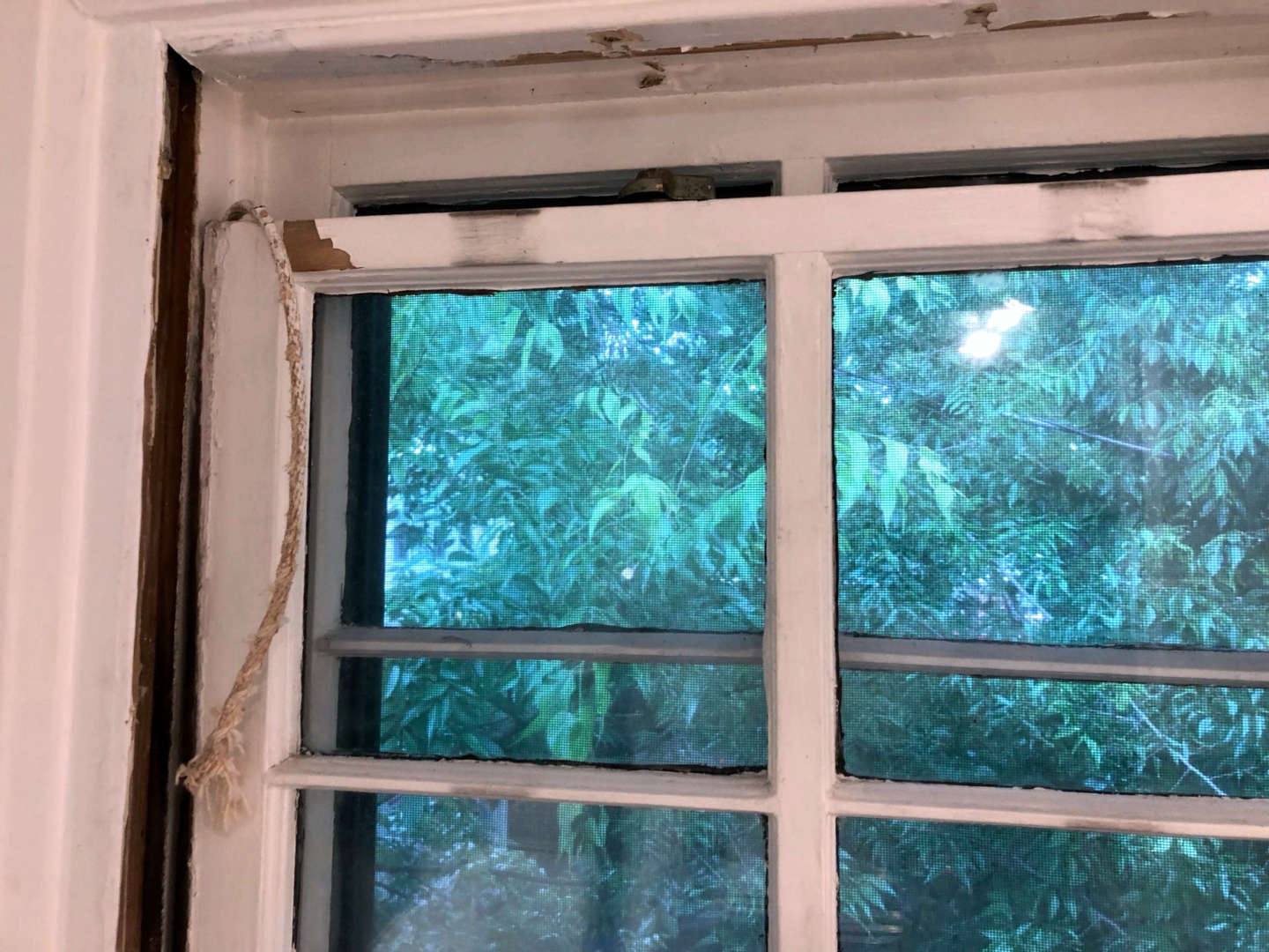 With the stop beads removed and cords cut the sash can be removed from the window frame.