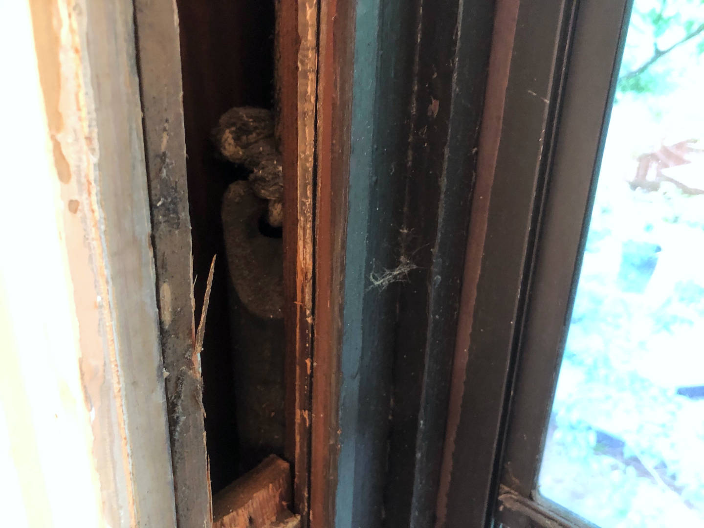 This is the hidden pocket inside a window frame where the window weight resides along with the broken sash cord which we're replacing!